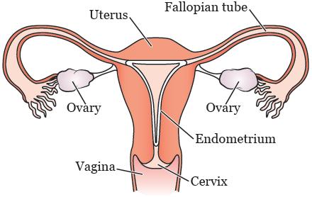 cervical cancer on fertility