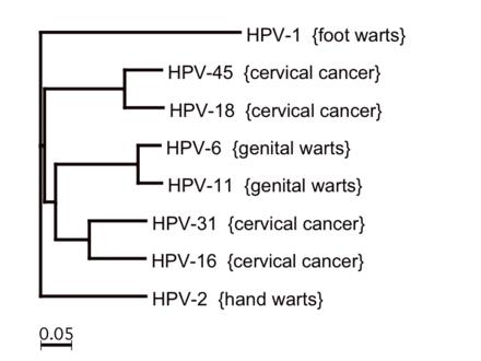 papillomavirus type virus cancer pulmonar tpu