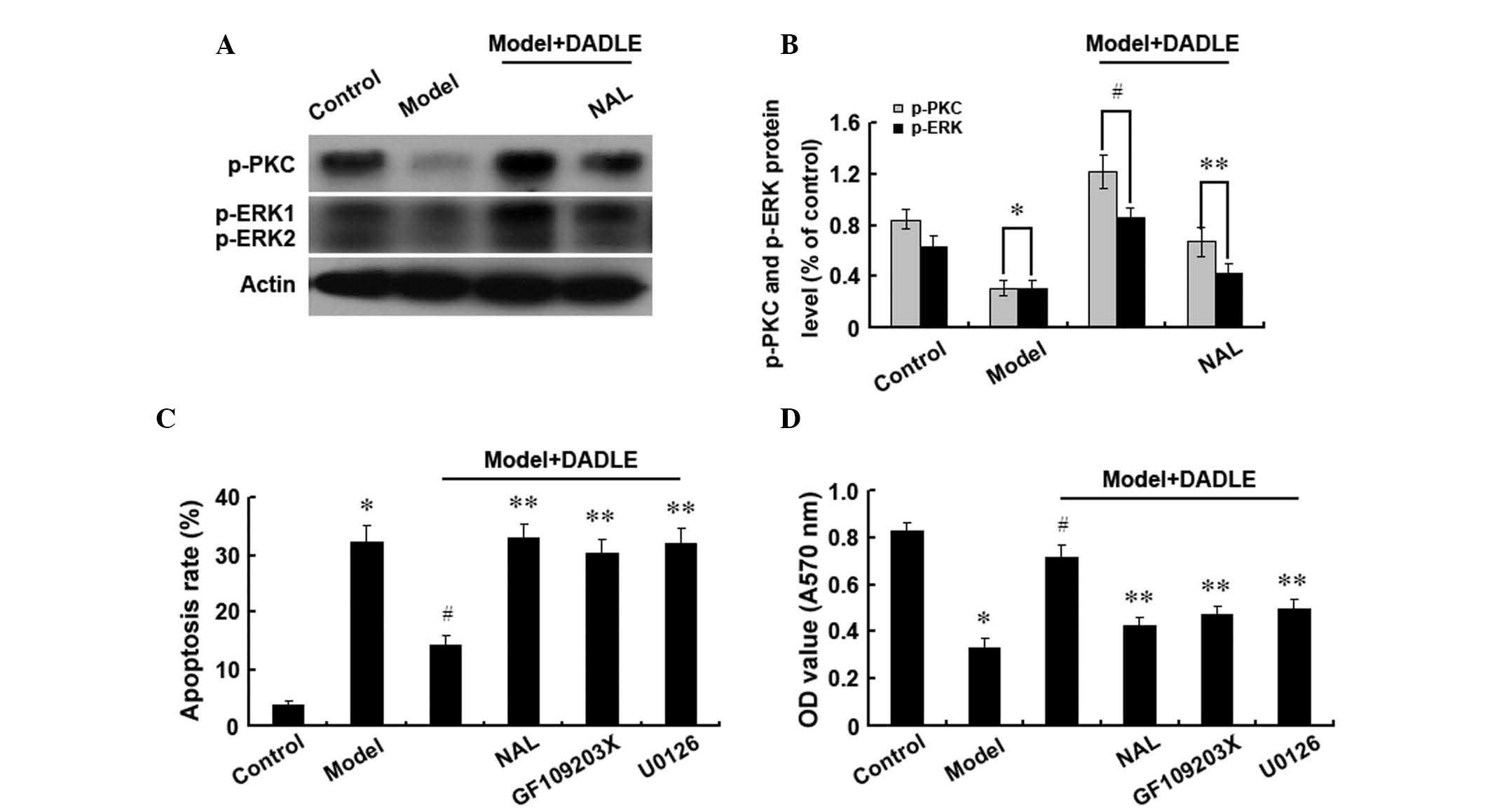 hepatocellular cancer receptor
