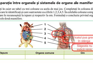De unde vin paraziți în ficat uman: simptome și tratament, risc de infecții parazitare