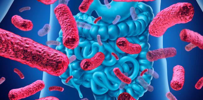 bacterii rele in intestin)
