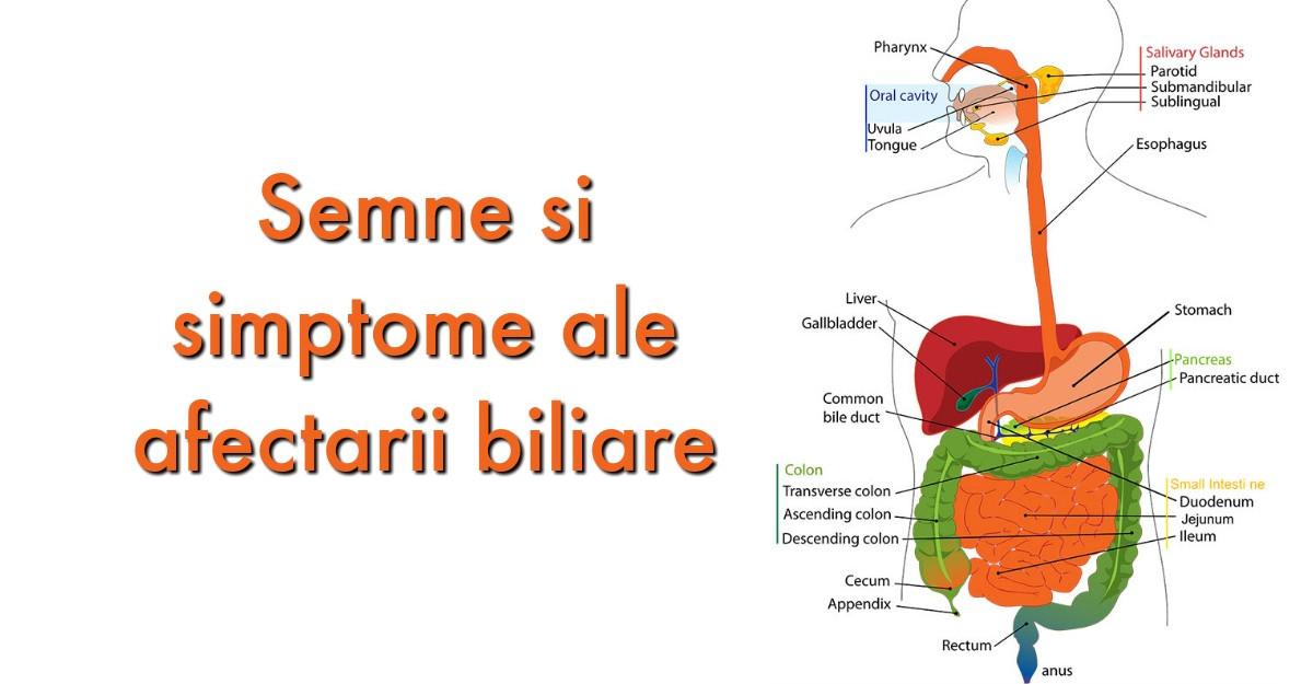 Flatulenţa: cauze şi remedii | asspub.ro