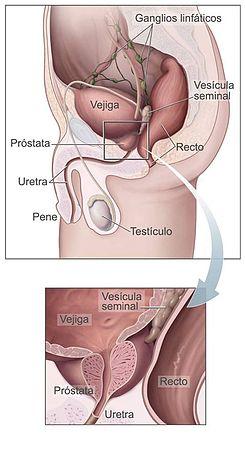 Prostata: ce este glanda prostată?