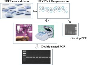 human papillomavirus deoxyribonucleic acid detection assay