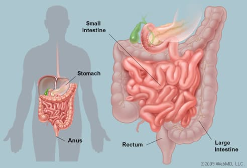cancer intestinal function)