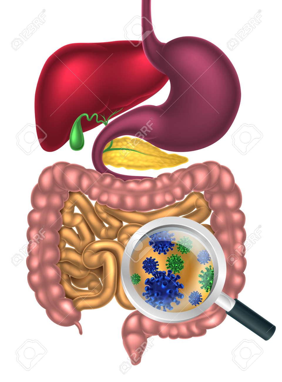virusi digestivi)