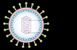 hpv virus overdracht)
