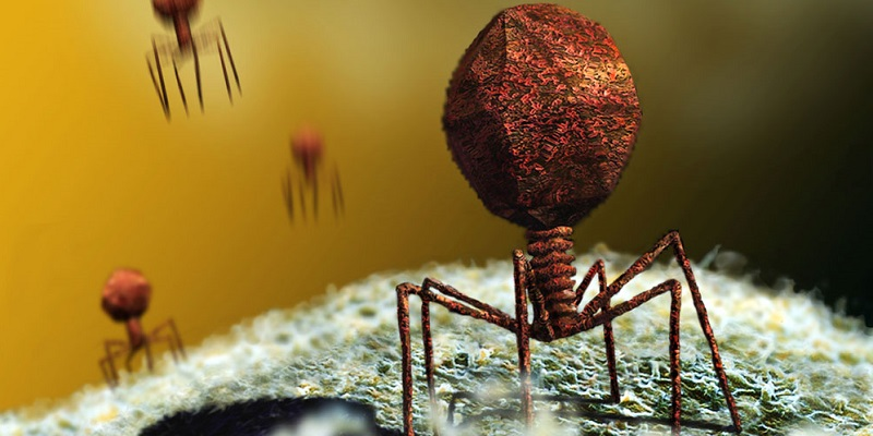 bacterii virusi
