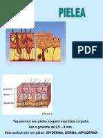 papillary urothelial hyperplasia icd 10 laryngeal papillomatosis ???