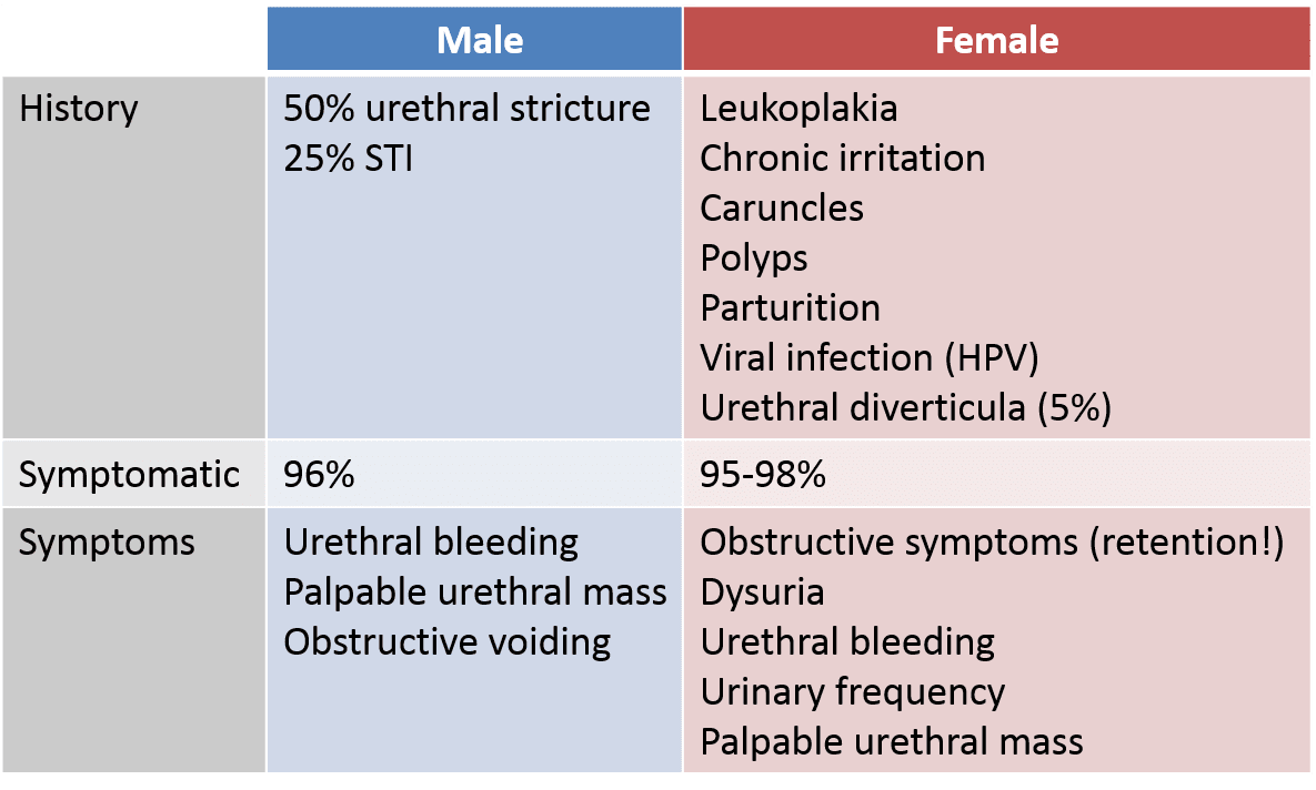 urethral papilloma carcinoma