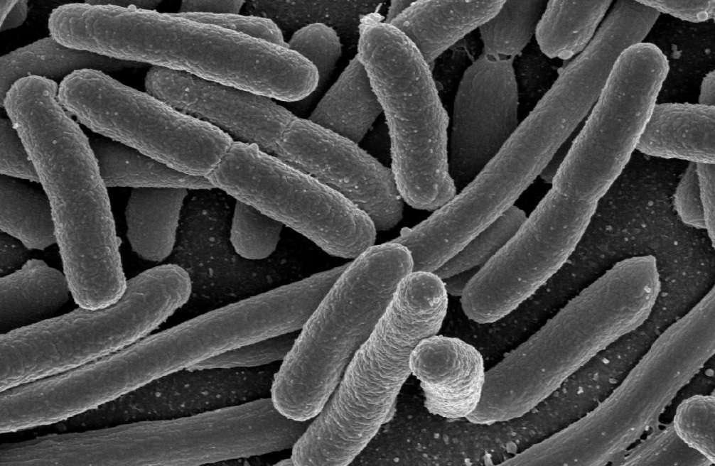 bacterie 13 lettres)