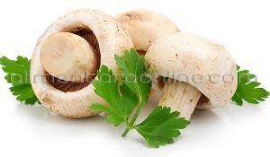 ciuperci kg pret)