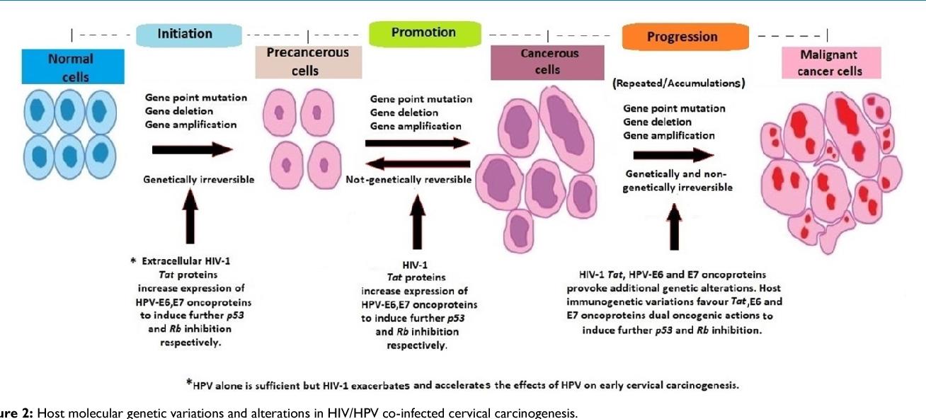 hpv cancer genetics papilloma dellugola intervento