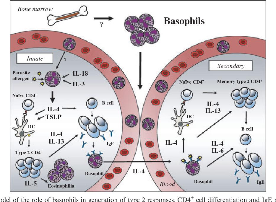 helminth infection eosinophilia