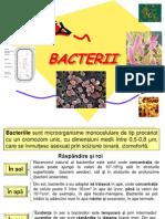 bacterii eseu
