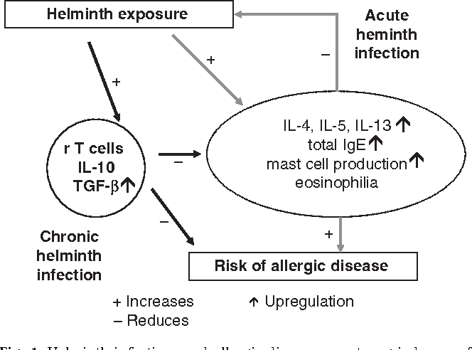 helminth and allergic disease)