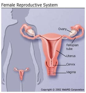 uterine cancer effects)