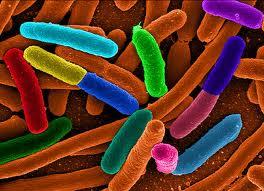 bacterii rele