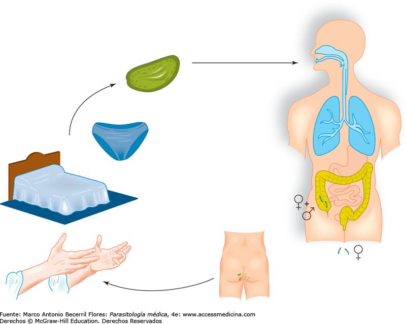 Atlas-de-Parasitologia asspub.ro - PDF Free Download
