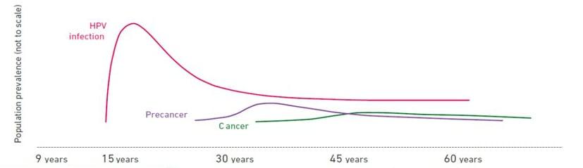hpv cervical cancer vs genital warts
