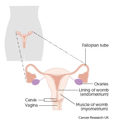 centre de detoxifiere a organismului in romania gastric cancer follow-up guidelines