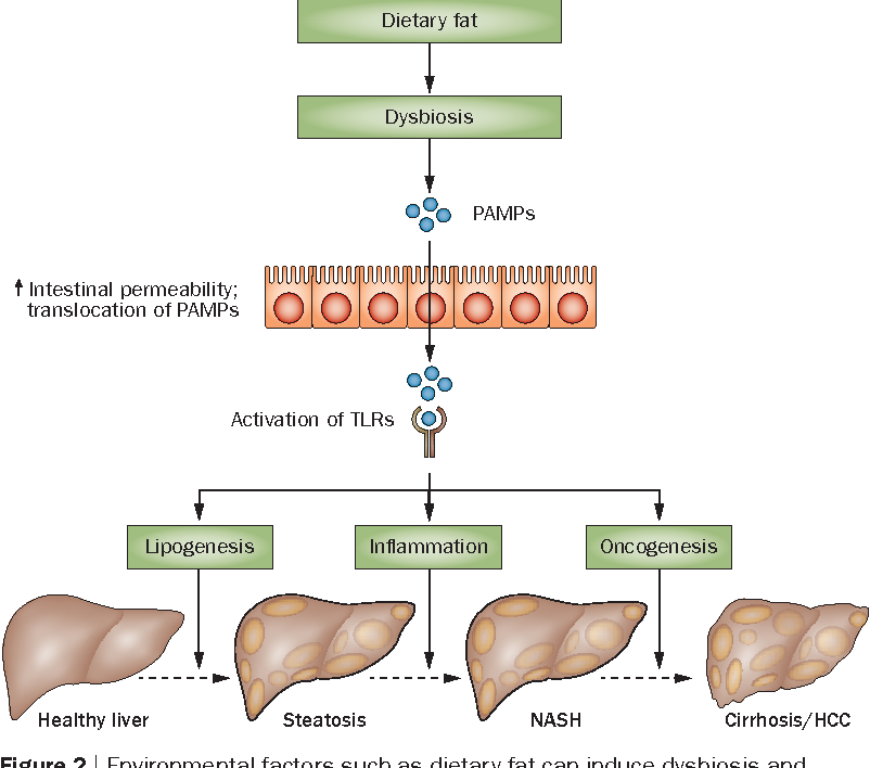 dysbiosis obesity cancer renal stadii