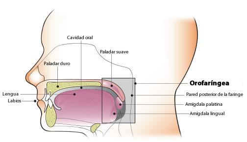 cancer limfatic simptome cauze papiloma garganta benigno