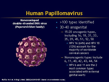 human papillomavirus infection ppt