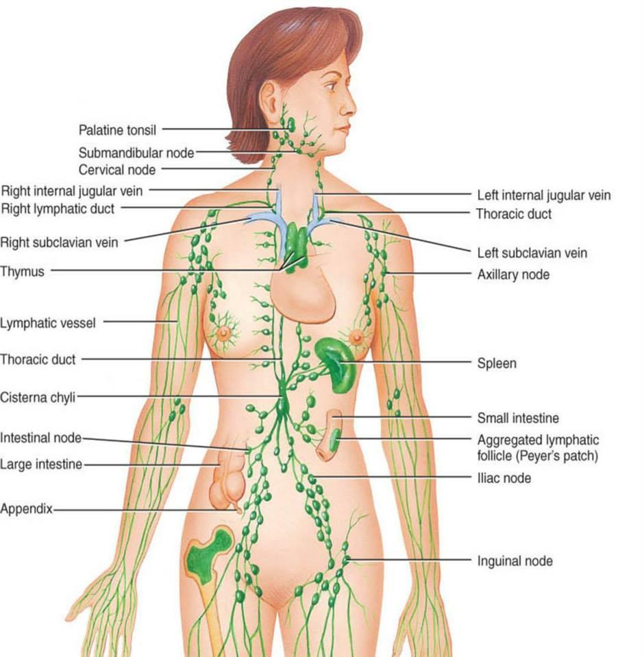 detoxifierea limfei simptome