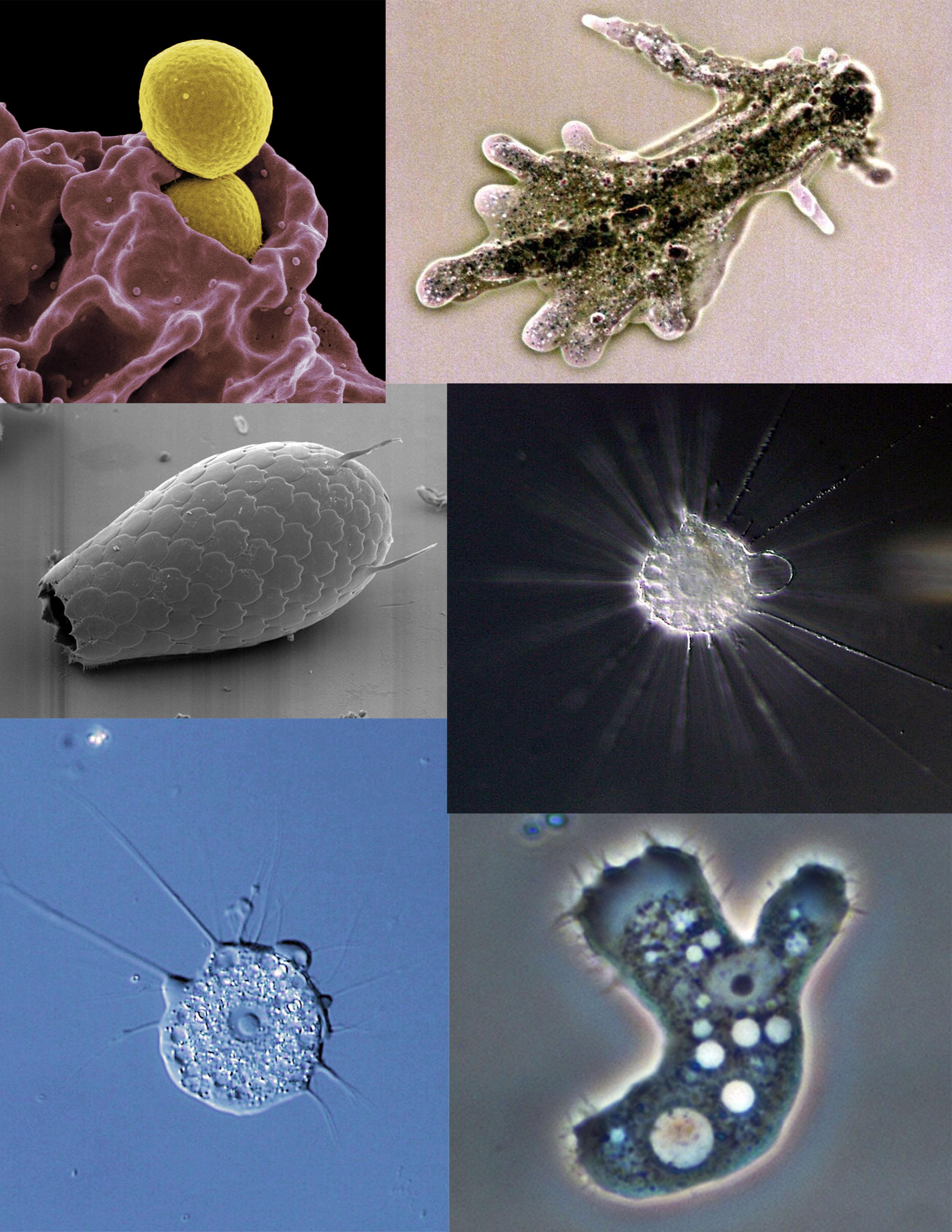 organismele parazite produc)