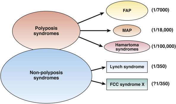 colon cancer genetic factors)