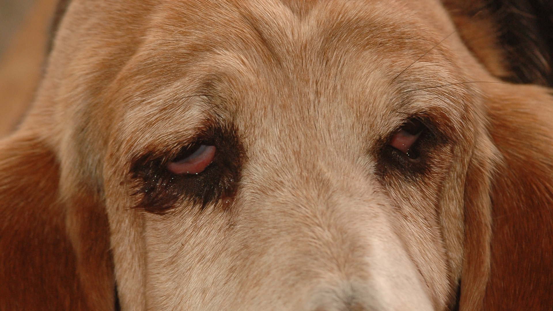 paraziti u psa priznaky)