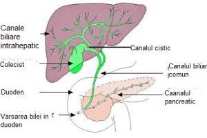 papilloma virus vie respiratorie