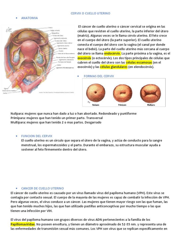 el virus del papiloma se transmite al feto que es de papiloma