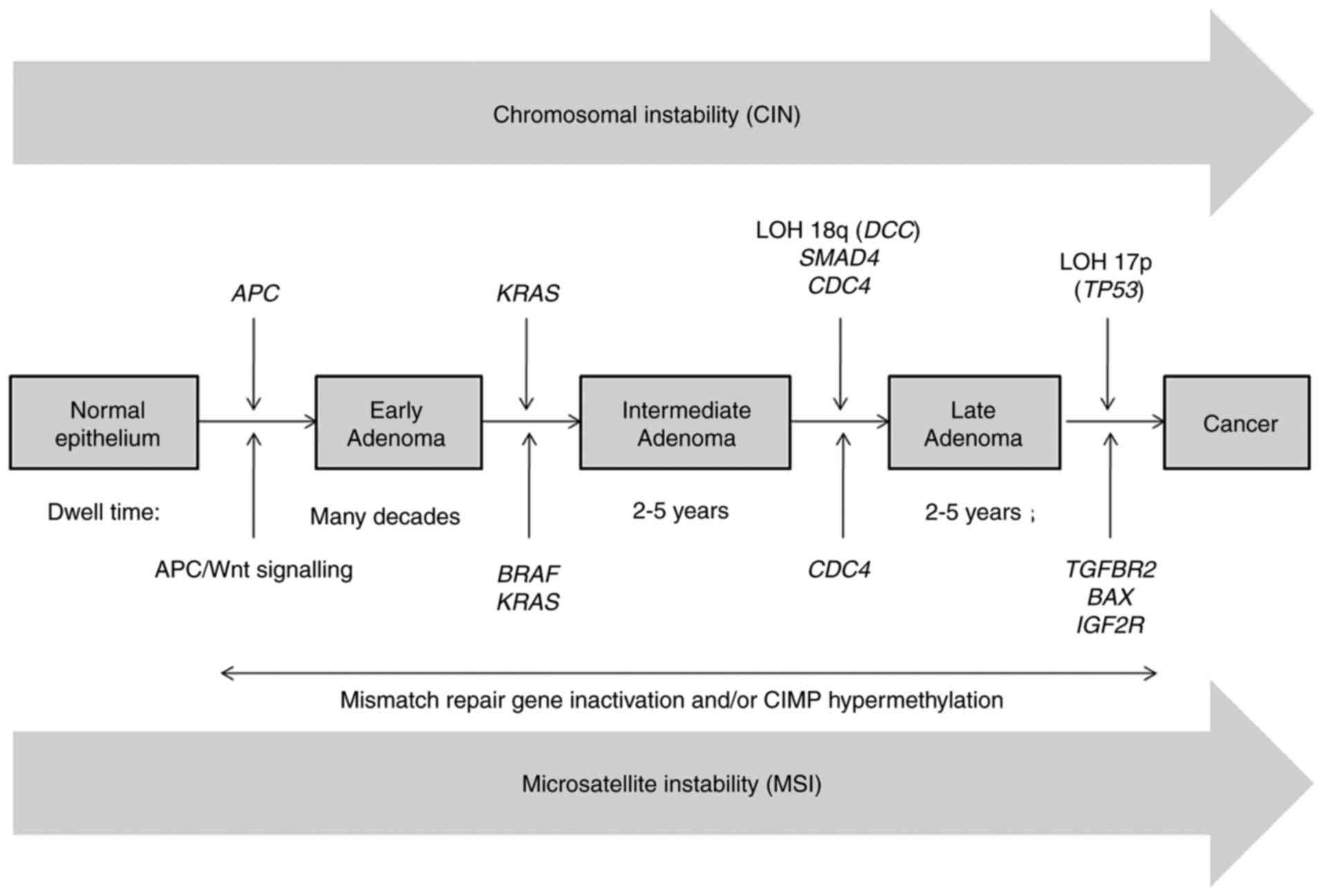 Mutaţii K-ras în tumori de colon | Synevo