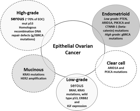 ovarian cancer review)