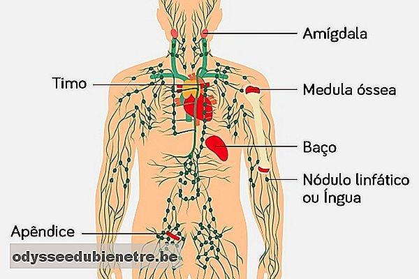 cancer hodgkin sistema linfatico)
