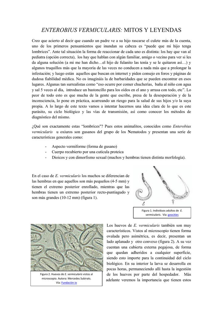 enterobius vermicularis reproduccion hpv nelluomo