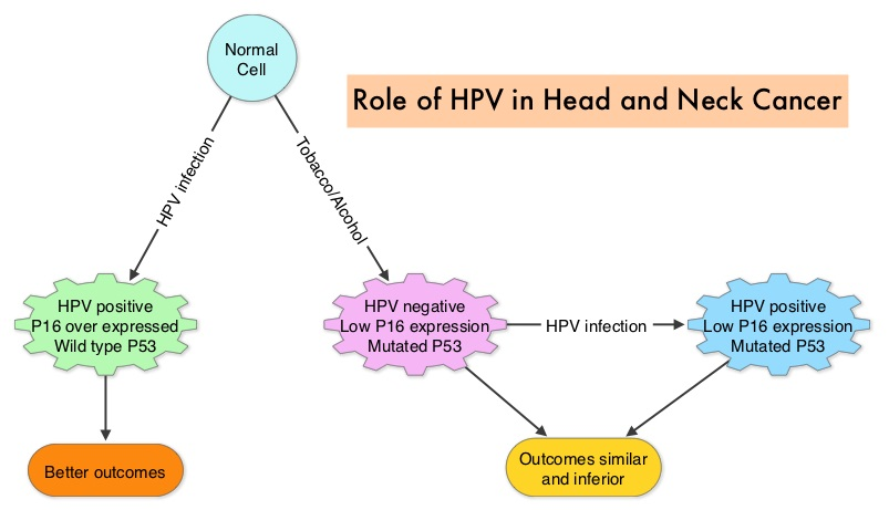 hpv und p16 hpv and pre cancer