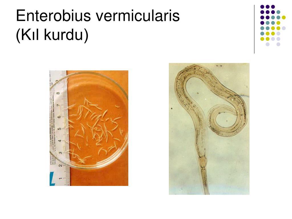 feline papillomas and warts