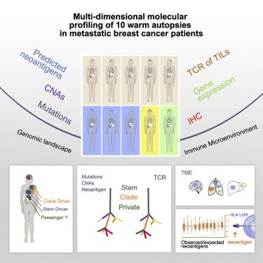 cancer metastatic gene
