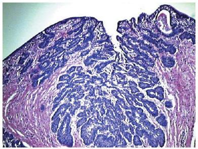 Tratat de Urologie I - Popescu
