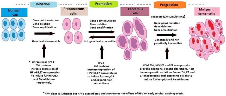 cervical cancer hereditary)
