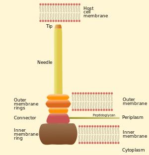 bacterie 3+