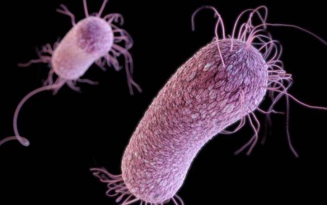 bacterii copii