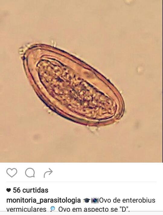 enterobius vermicularis doenca)