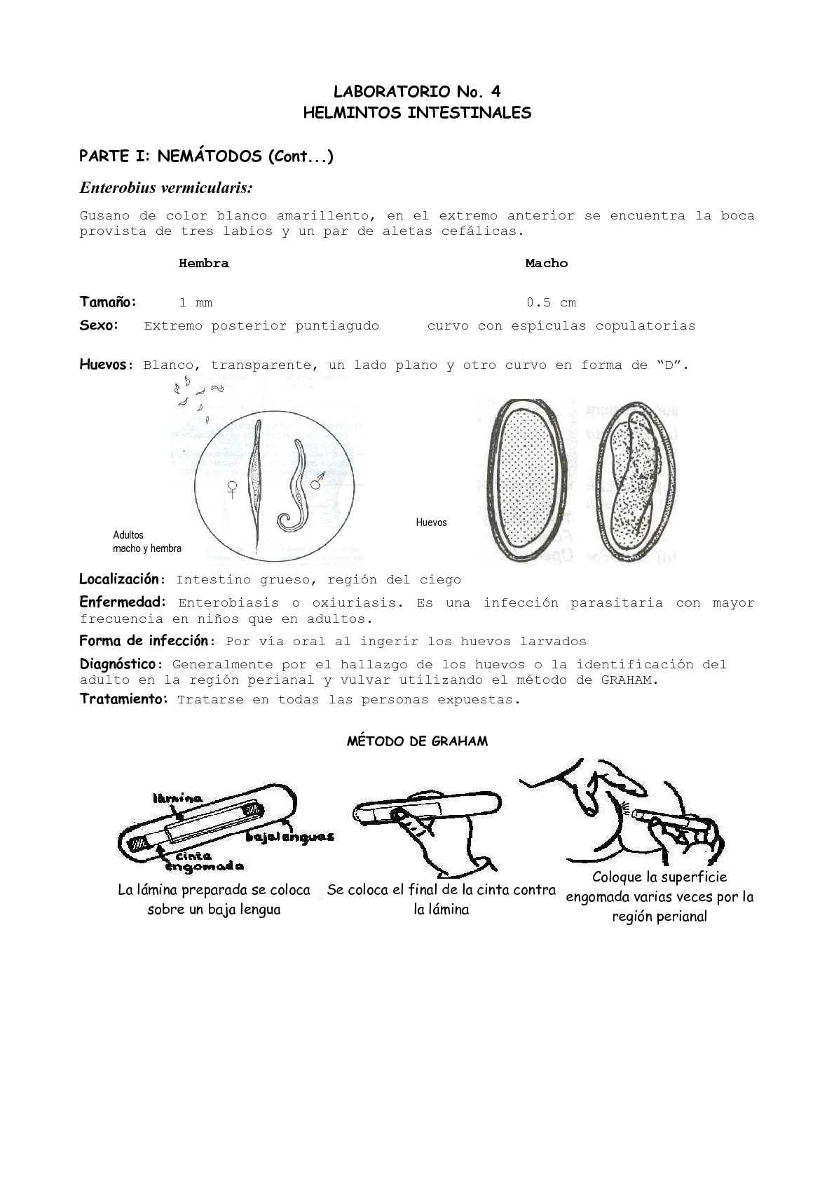 huevos de oxiuros vermicularis)