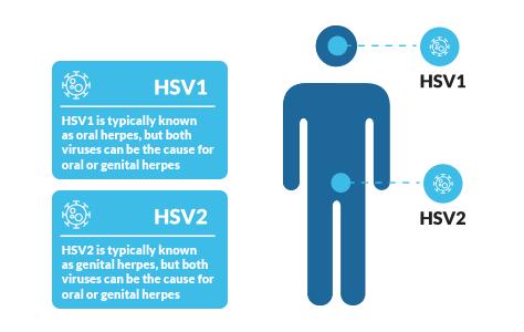 herpes genital sau hpv