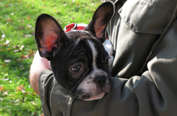 papiloma canino transmite humanos)