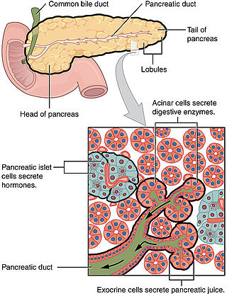 pancreatic cancer endocrine)
